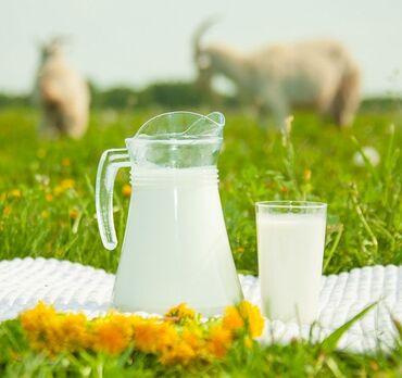 Красота и здоровье - Сокулук: Вкуснейшие козье молоко