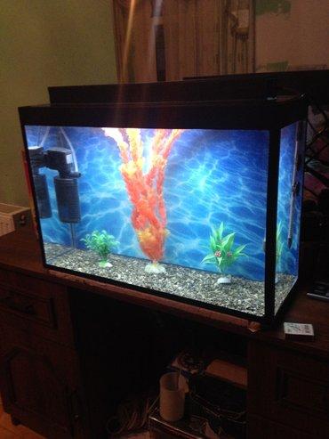 Bakı şəhərində teze akvarium ve icindeki avadanliqlarda teze karopkasinda  1-filtir