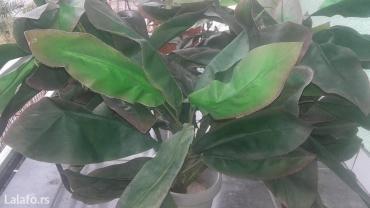 Veštačko cveće.... Pogledajte i ostale predmete iz moje ponude. :) - Zrenjanin