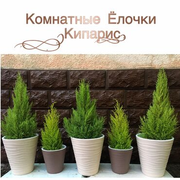 пуфики для детей в Кыргызстан: Комнатные растения радуют глаза и восхищают ваших гостей  Украшают