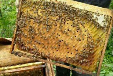 Продаю пчелы сена договорная зимовалны пчелы в Бишкек