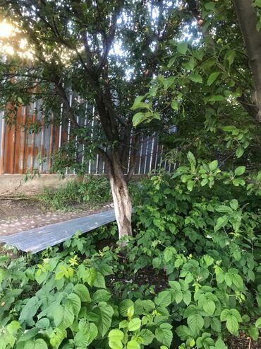 Сони телефон - Кыргызстан: Спил деревьев уборка территории кости трава и сонников . звоните по