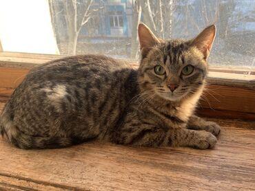 Сладкая девочка.  Кошка 5 месяцев. Стерилизована, привита, от паразито