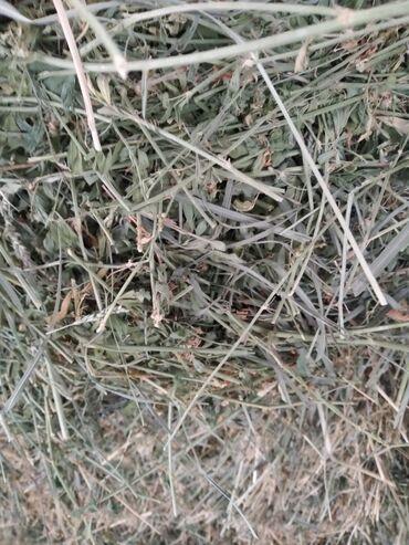 самсунг а 50 цена in Кыргызстан | SAMSUNG: Сено!!!Продаю сено в тюках второй укос.тюки мощные!!!сено