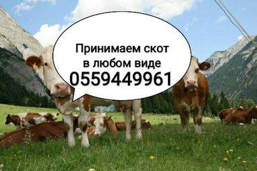 244 объявлений | ЖИВОТНЫЕ: Куплю | Коровы, быки, Козы, козлы, Лошади, кони | Круглосуточно, Любое состояние