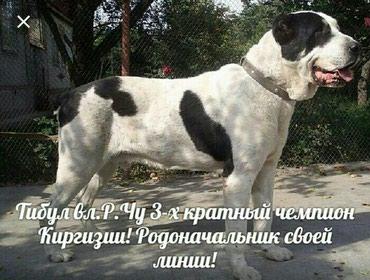 АЛАБАЙ в Novopokrovka