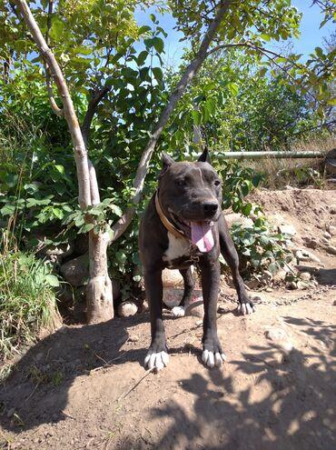 Животные - Байтик: Собаки