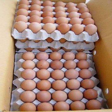 Продаю Яйцо инкубационное Арбор Акрос Росс 308,Кобб 500 процент