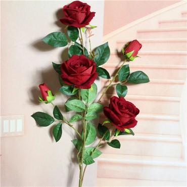 Роза декоративная — один из старейших в Бишкек