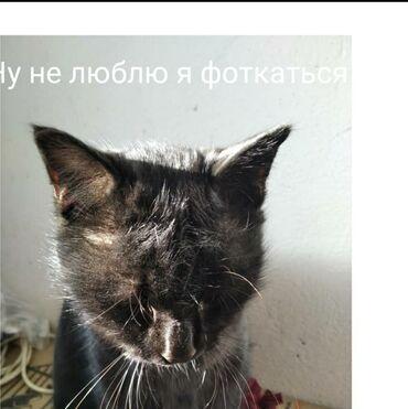 Кот, черный, брутальный, характер арийский, может жить во дворе