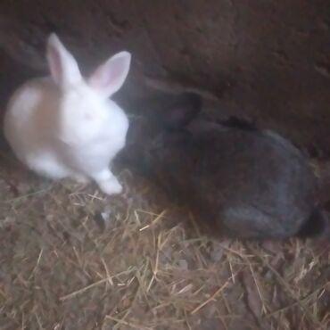 Животные - Беловодское: Кролики