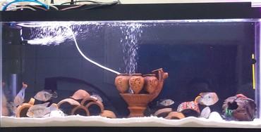 Akvarium: uzunu - 1metr, eni - 40sm, hündürlük - 50sm, Filtr