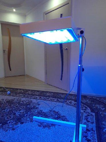 Сдаю фото лампу от желтухи 1сутка 400 с в Бишкек