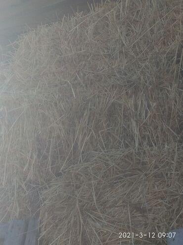52 объявлений: Продаю солома ячменная
