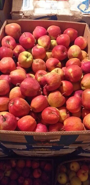 Сокулук кыздар - Кыргызстан: Продаются яблоки иссык-кульский сорт превосходный в количестве 2 х