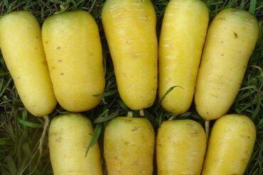 манго фрукт цена бишкек в Кыргызстан: Жёлтая морковь продаётся / Сары сабиз сатылат. Оптом