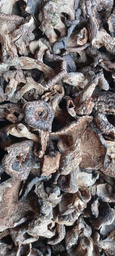 21 объявлений: Куплю сушёные (Медвежье ухо) грибы! Кургатылган козу карын (Аюу кулак)