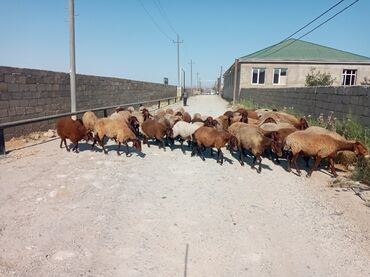 qala konstruktorlari - Azərbaycan: Qala