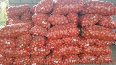 Продаю 3 тонны лука оптом с бесплатной доставкой