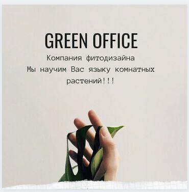 увлажнитель воздуха бишкек in Кыргызстан | ДРУГИЕ КОМНАТНЫЕ РАСТЕНИЯ: Компания Green office-мы научим вас языку комнатных растений!*