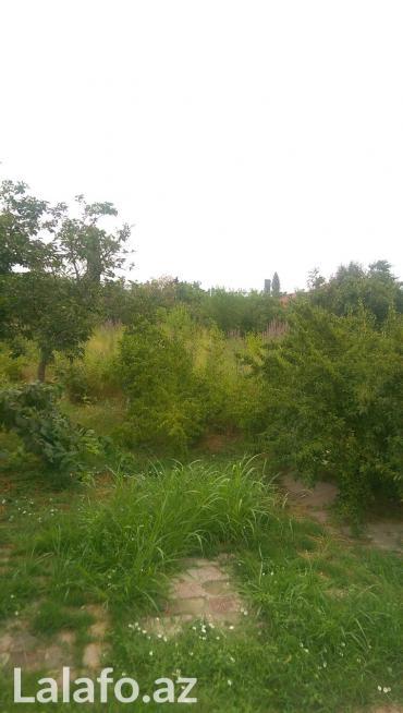 Xaçmaz şəhərində Xacmazda Carxi kendinde 1 hektar kupcali torpaq sahesi satilir.  Diger