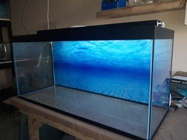 Bakı şəhərində 220 litrelik teze hazirlanip akvarium
