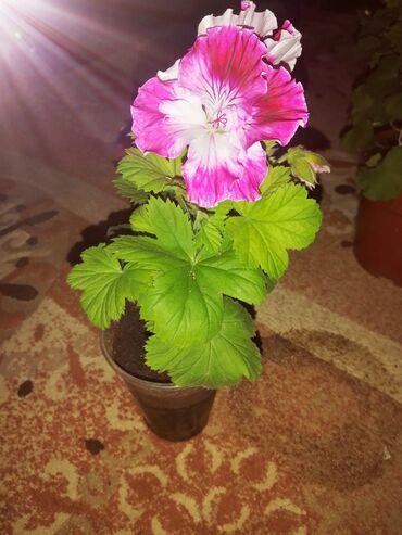 приму в дар породистую собаку в Кыргызстан: Если вы хотите подарить цветы. То надо дарить такие, чтобы осталось па