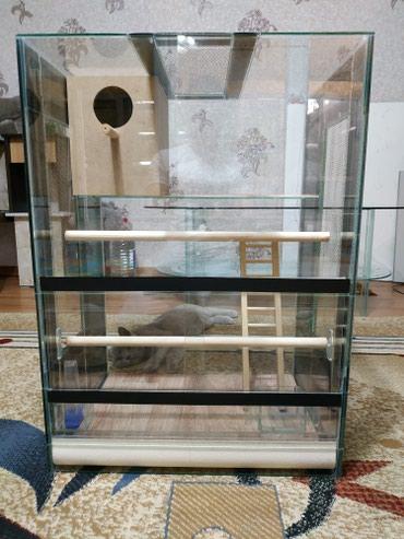 Террариум для больших попугаев в Бишкек