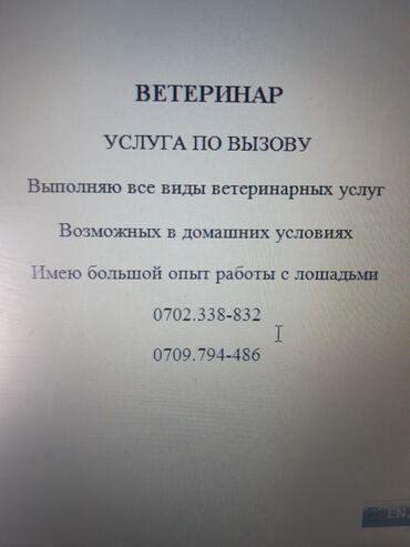 мужчины по вызову бишкек в Кыргызстан: Ветеринар по вызову