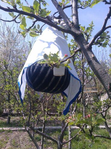 Птицы - Кыргызстан: Перепёлка поющие, вместе с клеткой (тыква)