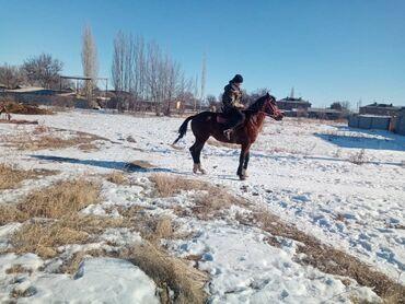Болгарка бу - Кыргызстан: Жазга 4 жаш эркек