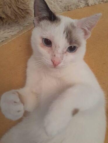 Котенок 6 месяцев, самец Отдадим в хорошие руки