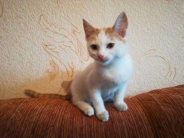 skidki na futbolki в Кыргызстан: Отдам котенка в хорошие руки. Срочно