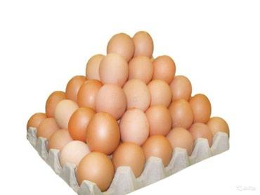 Продаю куриное домашнее яйцо, инкубационное яйцо 15 сом в Бишкек