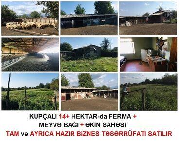 Satılır - Zaqatala: KUPÇALI 15.21 Hektar (9.21+6.0) ərazisi olan hazır BİZNES TƏCiLi SATIL