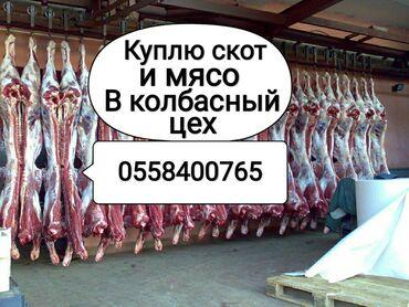 Животные - Сокулук: Куплю в колбасный цех: лошадей коров тёлок бычков и вынужденый забой в