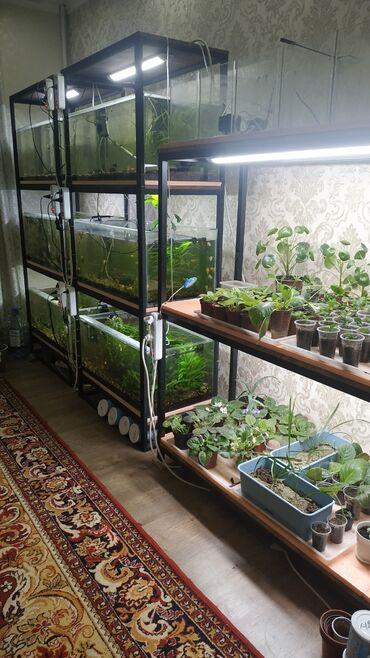 skidki na futbolki в Кыргызстан: В связи с переездом продаю готовый бизнес по разведению аквариумных