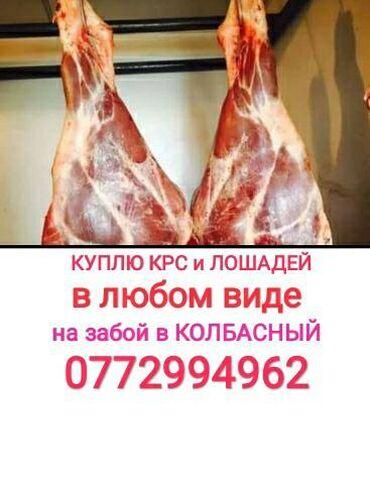 купить коврик для йоги в Кыргызстан: Куплю скот в любом виде. Приду сам