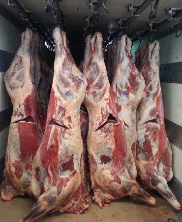 животн в Кыргызстан: Куплю скот в любом виде мал сатып алабыз уй бука кунаажын жылкы и