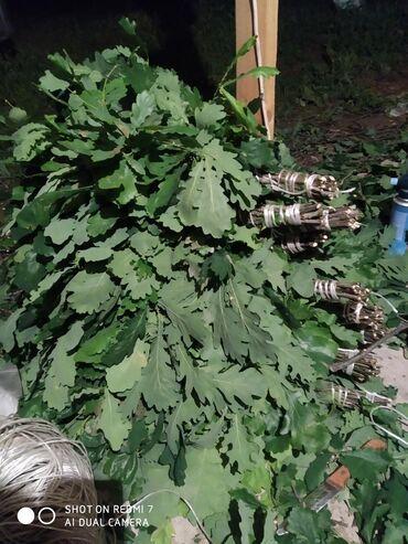 веники-для-бани в Кыргызстан: Дубовые веники веники банные берёзовые веники качественныеобъемные