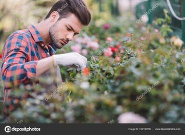 """В компанию """"Saudade"""" требуется садовник! в Бишкек"""