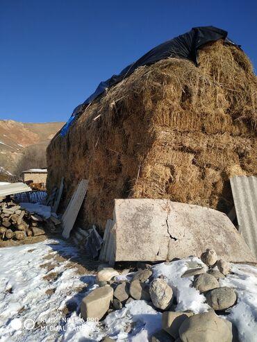 эндик чоп фото в Кыргызстан: Таза кунгой чоп сатылат! 51км