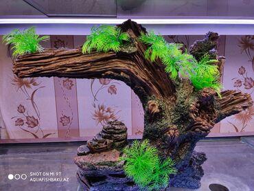 Akvarium dekorları1.Dekor dag hun 50sm uzn 35sm 54.99azn.2.Dekor agac