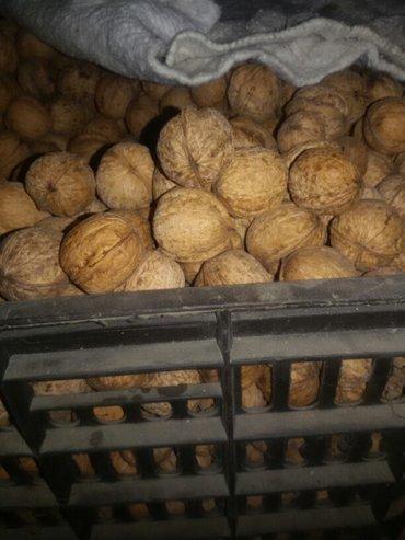 продаю орехи (много ) в Кок-Ой