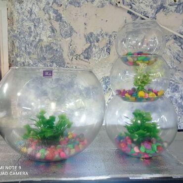 Salamlar yumuru akvaryumlar boyuk 20 azn orta 15 azn orta kicik 10 azn