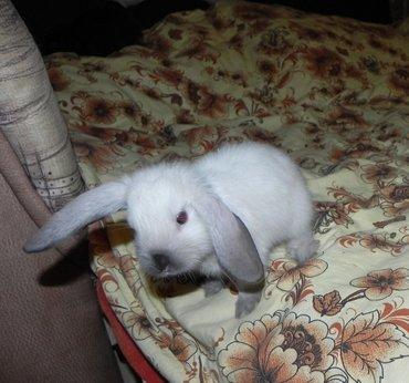 СРОЧНО продаю декоративного кролика вместе клеткой... в Бишкек