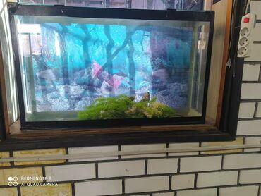 Аквариумы - Кыргызстан: Срочно продаётся аквариумы 80л. 5шт дешево