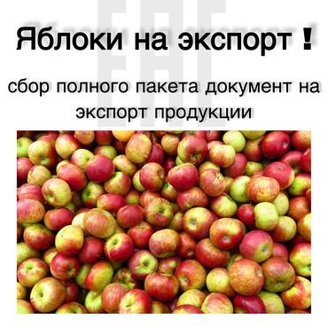 ЯБЛОКИ НА ЭКСПОРТ ! в Бишкек