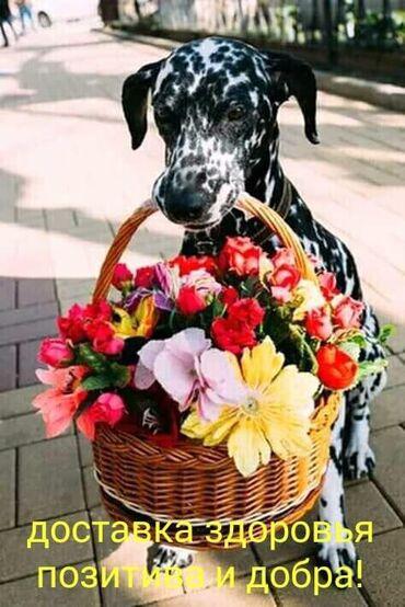 Цветы, свадебные букеты, эксклюзивные на заказ. Живые в горшках для
