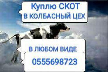 Куплю | Коровы, быки, Лошади, кони | Круглосуточно, Любое состояние